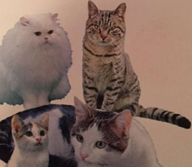 Dr. Fox Animal Series: Cat Care (1987)