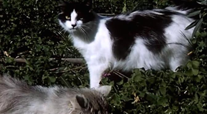 It's a Cat's Life (1957)